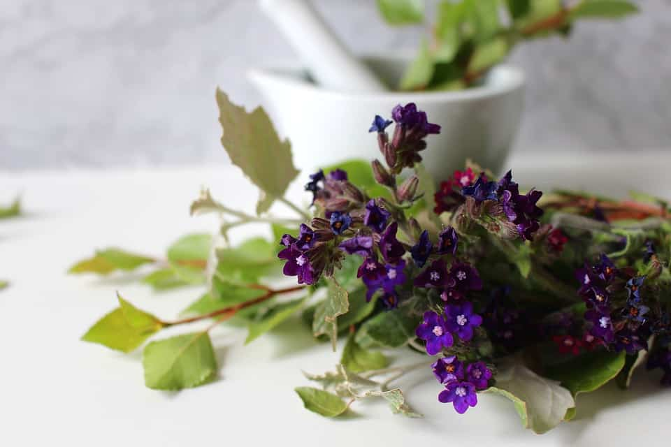Homeopathic Remedies For Acidity