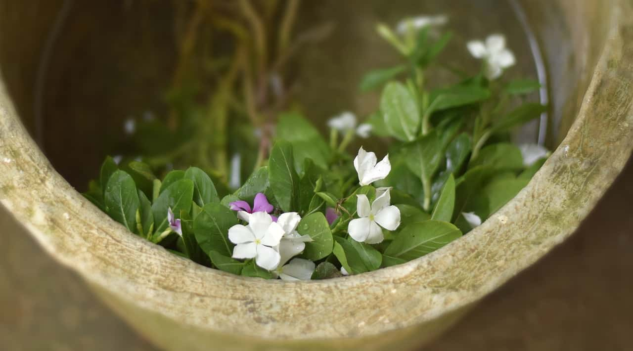 Herbal Medicine: Clinical And Research Issues