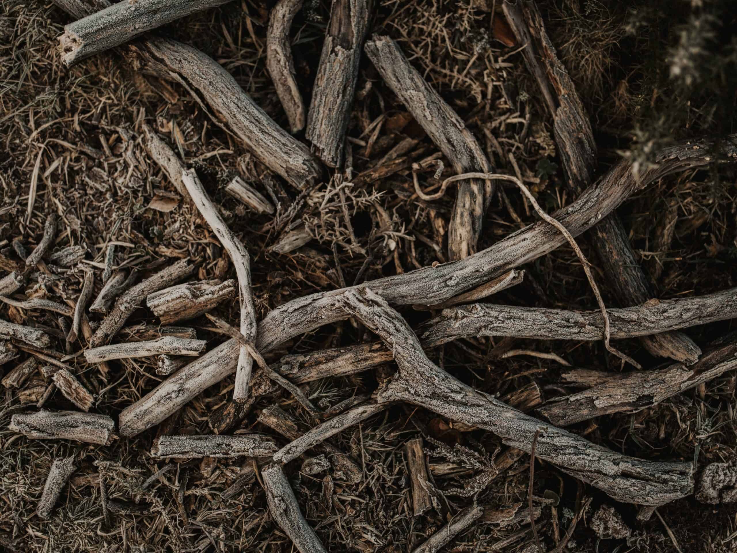 Red Ginseng Dried Roots: Know More