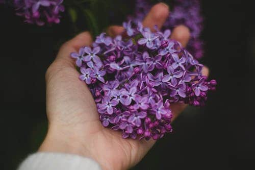 A Detailed Information On The Benefits Of Lavender On Health And Skin