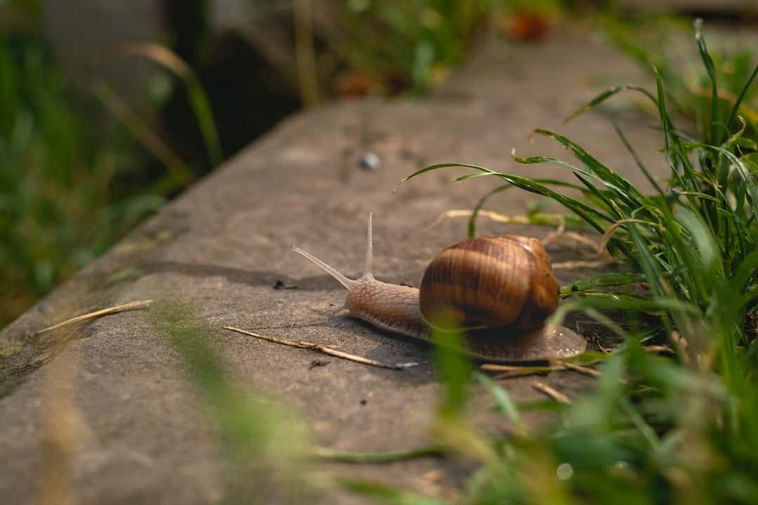 A snail sitting on the grass