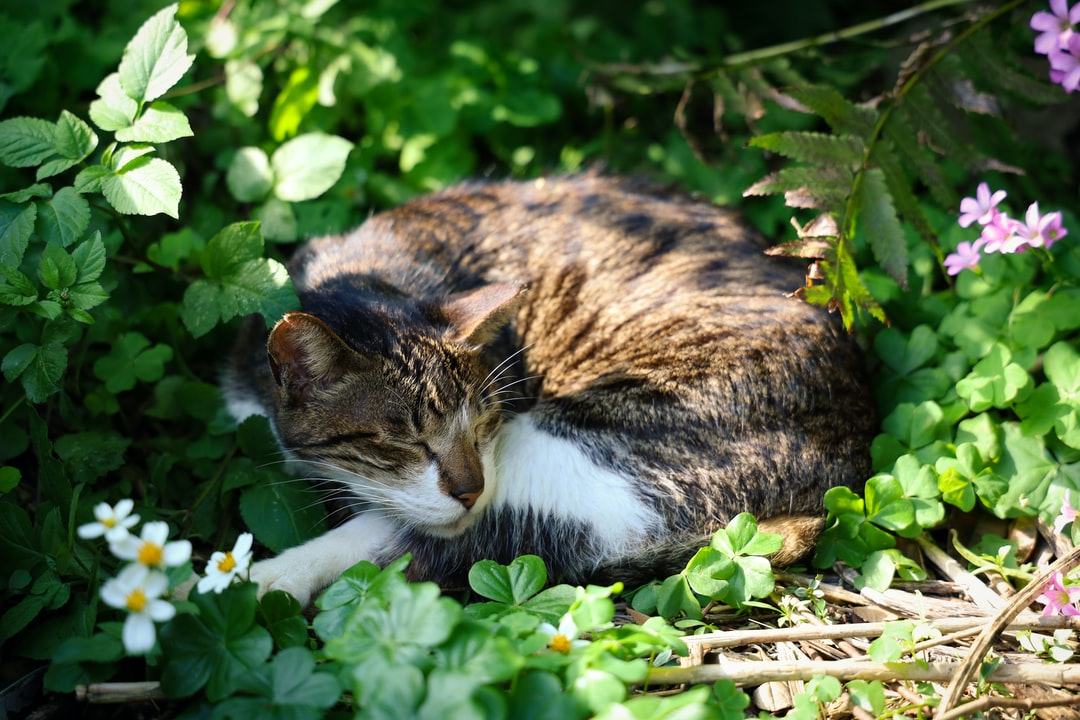 A cat lying on top of a green plant in a garden